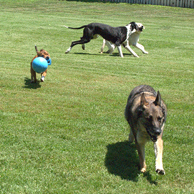 Dog Daycare Odenton MD